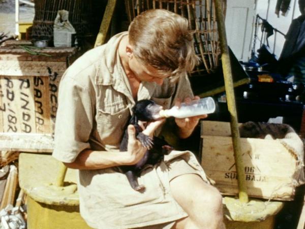 Дэвид Аттенборо во время экспедиции в Африку