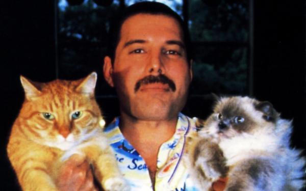 Фредди Меркьюри с домашними питомцами